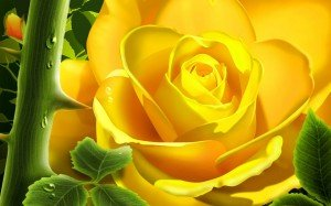 rosejaune