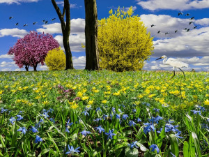 spring-meadow-1320321_960_720